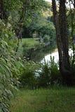 Natursikt av dammet och forna och flora med träd och all sakergräsplan royaltyfri bild