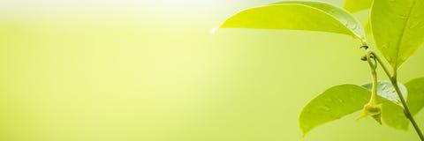 Natursikt av gräsplansidor under solen Naturligt grönt träd oss royaltyfria bilder