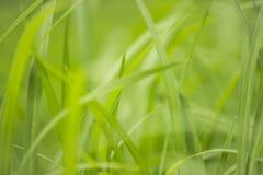 Natursikt av gräsplansidor under solen Naturligt grönt träd oss royaltyfria foton