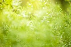 Natursikt av gräsplansidor under solen Naturligt grönt träd oss royaltyfri bild