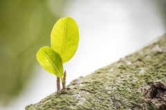 Natursikt av gräsplansidor under solen Naturligt grönt träd oss royaltyfri fotografi