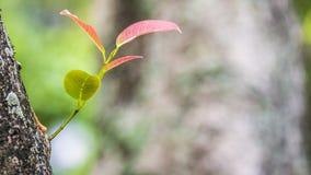 Natursikt av gräsplansidor under solen Naturligt grönt träd oss arkivfoto