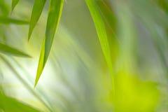 Natursikt av gräsplansidor under solen Naturligt grönt träd oss arkivbilder