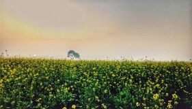 Naturskönhet arkivbilder