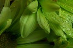 Naturskönhet Royaltyfria Bilder