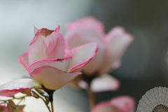 Naturskönhet Royaltyfri Fotografi