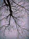 Naturskönhet av kashmir Arkivfoton
