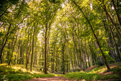 Naturskogbakgrund arkivbild