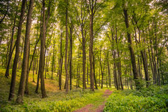 Naturskogbakgrund arkivfoto