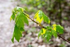Naturskoglandskap Stäng sig upp skognaturjordning i parkera under våren Royaltyfri Bild