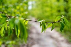 Naturskoglandskap Stäng sig upp skognaturjordning i parkera under våren Arkivbilder