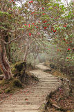 Naturslinga med rhododendron himalaya Royaltyfri Foto