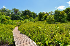 Naturslingor i djungeln Arkivfoton