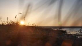 Natursolnedgång Havet vinkar, flodgräs som svänger i vinden på en härlig solnedgångkonturnatur royaltyfri foto