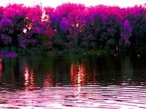 Natursommerfluß und -Baumreihe auf dem Ufer sehen direkt an Stockbilder