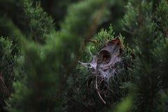 Naturspinnen Stockbilder