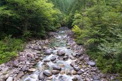 Naturszene mit Gebirgsfluss, Nebenfluss mit haarscharfem Wasser Lizenzfreie Stockfotografie