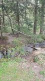 Naturszene Tennessee Seviervilles Pigeon Forge Gatlinburg rauchige Berge Cades-Bucht Ost-ursprüngliche Lizenzfreies Stockbild
