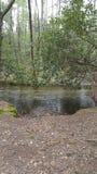 Naturszene Tennessee Seviervilles Pigeon Forge Gatlinburg rauchige Berge Cades-Bucht Ost-ursprüngliche Stockfotografie