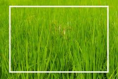 Naturtext med den vita fyrkanten på grön bakgrund Fotografering för Bildbyråer