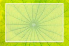 Naturtext med den vita fyrkanten på grön bakgrund Arkivfoton