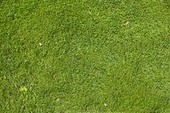 Naturtextur för grönt gräs fotografering för bildbyråer