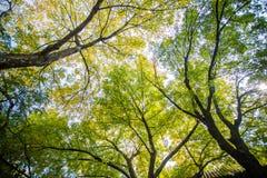 naturträd träna Arkivfoton