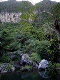 Naturumwelt stockfotografie