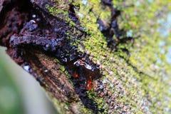 Naturungt träd royaltyfri bild