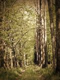 naturväg arkivbild