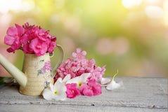 Naturvår för rosa och vit blomma och sommarbakgrund royaltyfria bilder