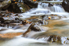 Naturvattenfall i djup skog Arkivfoto