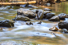 Naturvattenfall i djup skog Arkivbild