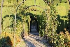 Naturvegetation Lizenzfreies Stockfoto