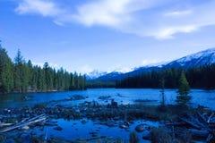 Naturveiw arkivbilder