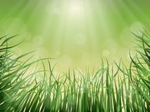 Naturvektorbakgrund Royaltyfri Foto