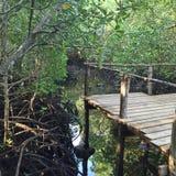 Naturwald Afrika Lizenzfreies Stockfoto