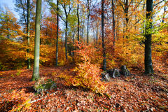 Naturwald im Herbst, Fall Lizenzfreies Stockfoto
