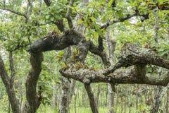 Naturwald (Mischwald) Lizenzfreie Stockfotos