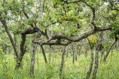 Naturwald (Mischwald) Stockfotos