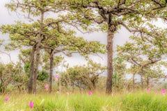 Naturwald (Mischwald) Lizenzfreie Stockfotografie