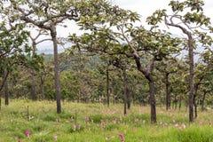 Naturwald (Mischwald) Lizenzfreies Stockfoto