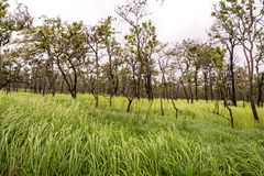 Naturwald (Mischwald) Stockfotografie