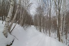 Naturwaldfußweg Snowy winterlicher durch Birkenwald - Cross Country-Skifahren, wandernd, fette Reifenfahrraderholung - im Gover stockbild