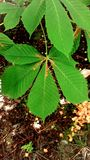 Naturwaldholz Lizenzfreie Stockbilder