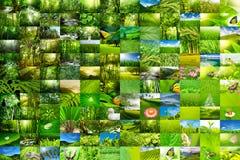naturwallpaper Arkivfoto