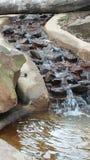 Naturwasserfall Lizenzfreies Stockfoto