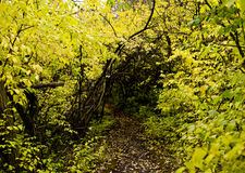 Naturweg stockbild