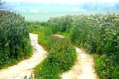 Naturweg auf den Gebieten stockfoto