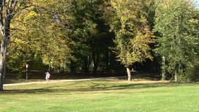 Naturweg im Herbst Leute gehen in den Herbstwald stock video footage
